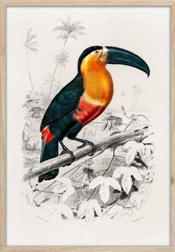 Rahmenbild Toucan