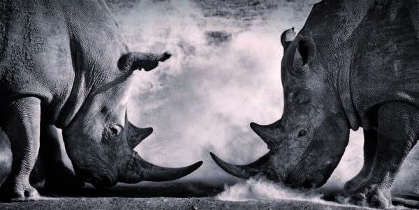 Leinwandbild Nashörner