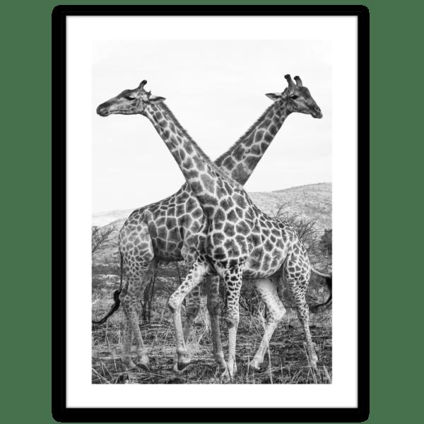 Artbox Giraffe