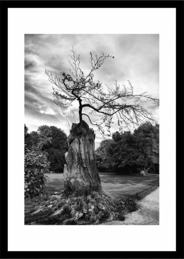 Rahmenbild Baum