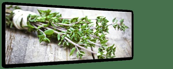 Glasbild Green Herb Ansicht schräg