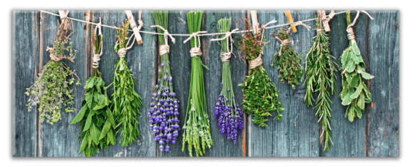 Glasbild Blue Herbs