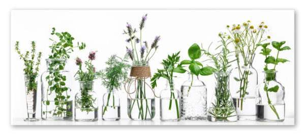 Glasbild Herbs
