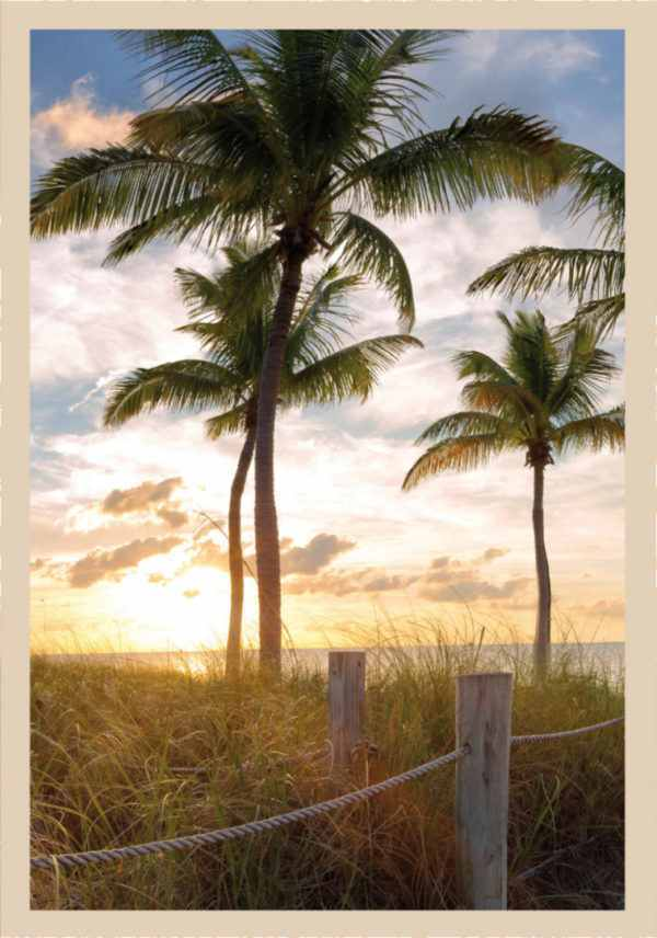 Rahmenbild Palmen