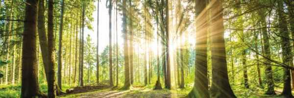 Leinwandbild Grüner Wald