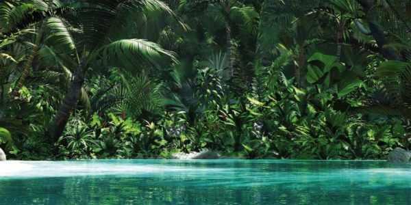 Leinwandbild Dschungel