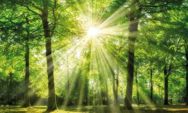 Leinwandbild Grüner Wald – 90x150cm